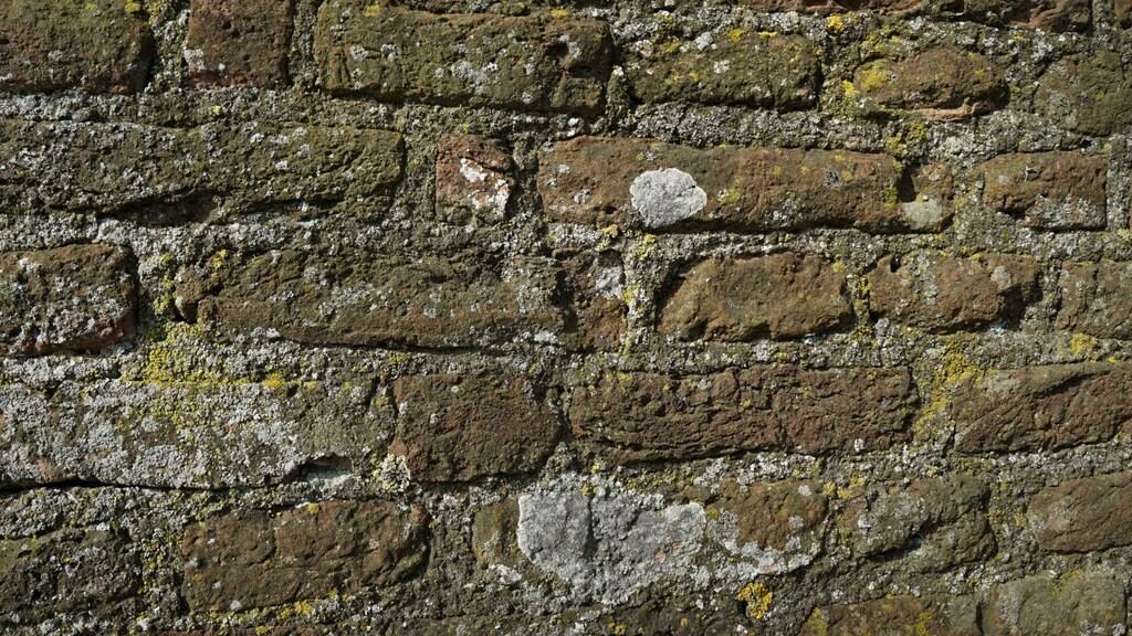 Een muur bedekt met verschillende soorten korstmos