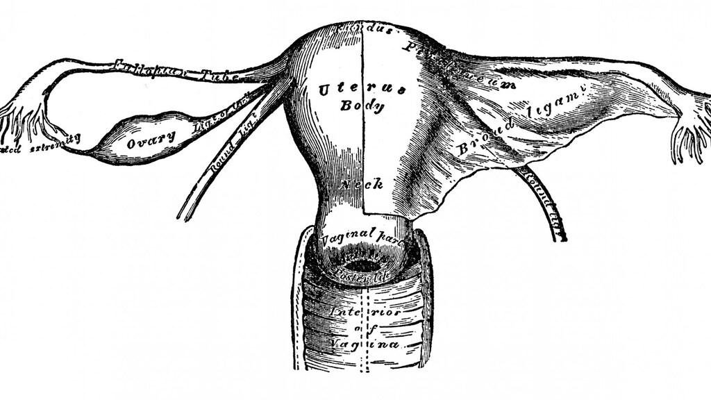 Tekening uit 1892 van een baarmoeder